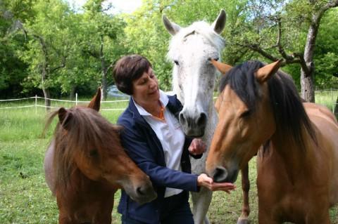 Tierarzt Treiber Pferde